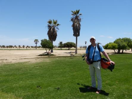 Springböcke auf einem Golfplatzfairway